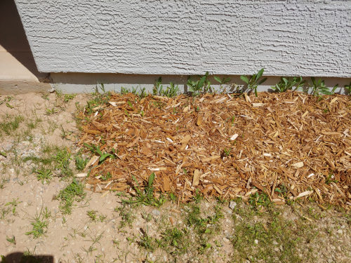 Cedar Mulch Insect Repellent
