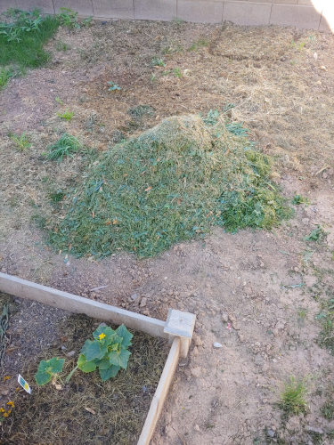 Grass Clippings Mulch Pile